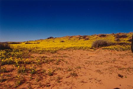 Cool Wallpapers Australian Outback
