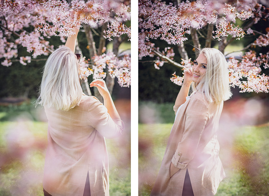kirsikkapuiden kukkia