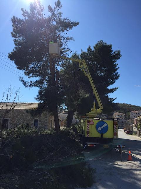 """Ρωξάνη Γκόγκου """"Με εντολή του γεωπόνου του Δήμου Ηγουμενίτσας ξηλώθηκαν τα πεύκα στα Σύβοτα"""""""
