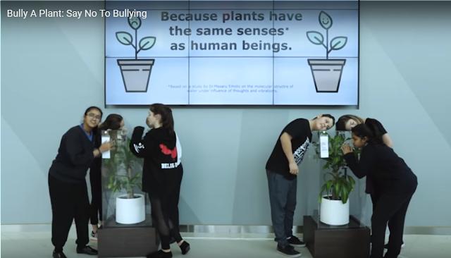 Bully%2Ba%2Bplant.png