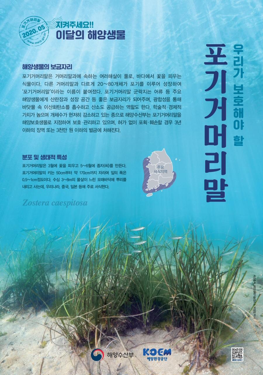 해수부, 2020년 5월 이달의 해양생물 '포기거머리말' 선정