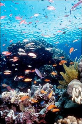 เกรท แบร์ริเออร์ รีฟ (Great Barrier Reef)