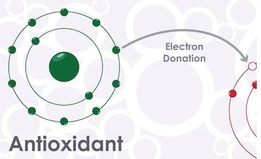 Antioxidant Activity