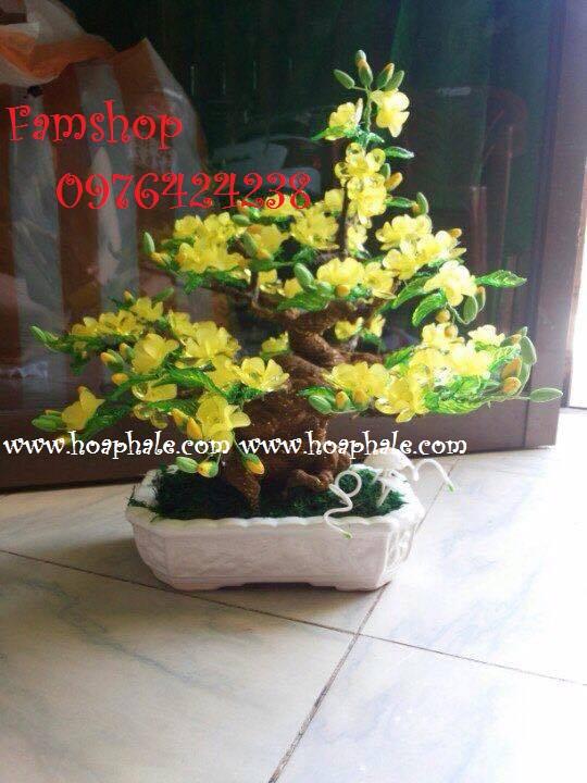 Goc bonsai cay hoa mai o Tran Vy