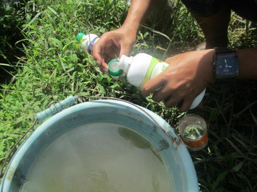 Meracik pupuk organik POC BMW untuk memasok kebutuhan enzim, unsur mikro, dan hormon/zpt melalui penyemprotan ke daun dan juga dikocorkan ke tanah.