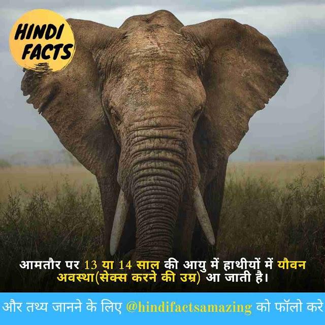 Elephants in Hindi - हाथियों के बारे में 30+ रोचक तथ्य