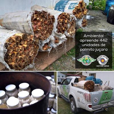 Policia Ambiental fecha fabrica clandestina de Palmito em Juquiá