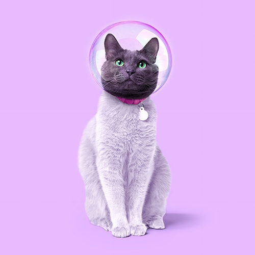 """Space cat"" por Paul Fuentes 
