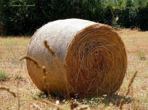 Balla di grano per Lughnasadh
