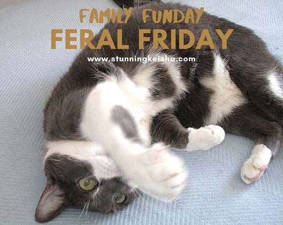 Feral Friday:  Family Funday
