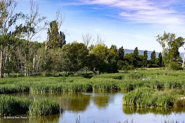Parque de Salburua, lagunas del humedal