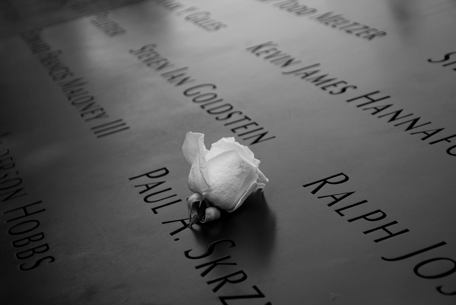 north south pool wtc 911 memorial white rose