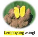 Lempuyang Wangi