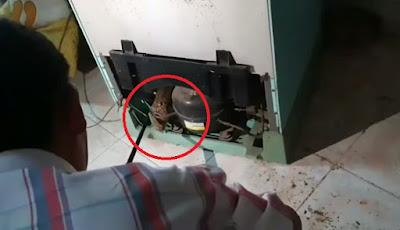 Penangkapan ular king kobra dari dalam mesin kulkas