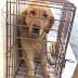 ΣΩΘΗΚΑΝ 7 σκύλοι από το παράνομο σφαγείο που έκλεισε στην Κίνα