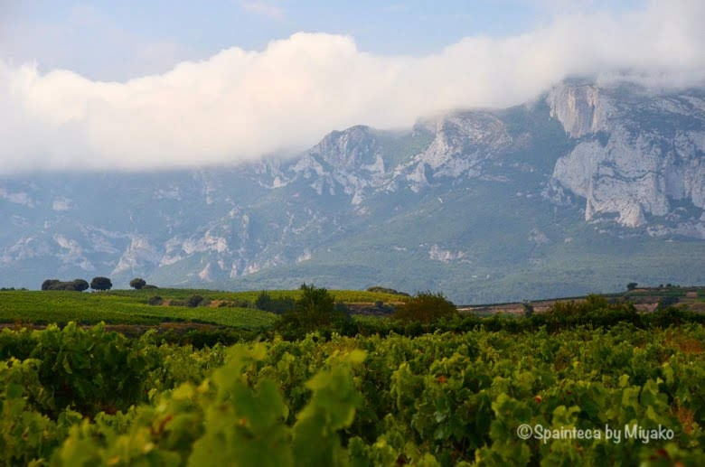 Vineyard's Landscape in La Rioja, Sierra de Cantabria 北スペインリオハの葡萄畑とぶどう畑