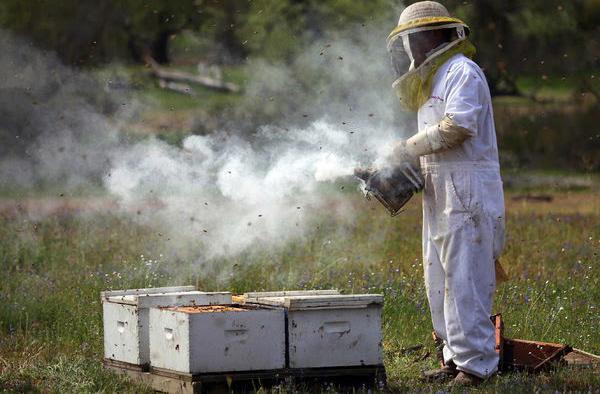 Σύρος: Επ' αυτοφώρω συλλήψεις μελισσοκόμων από την Πυροσβεστική για το κάψιμο κυψελών