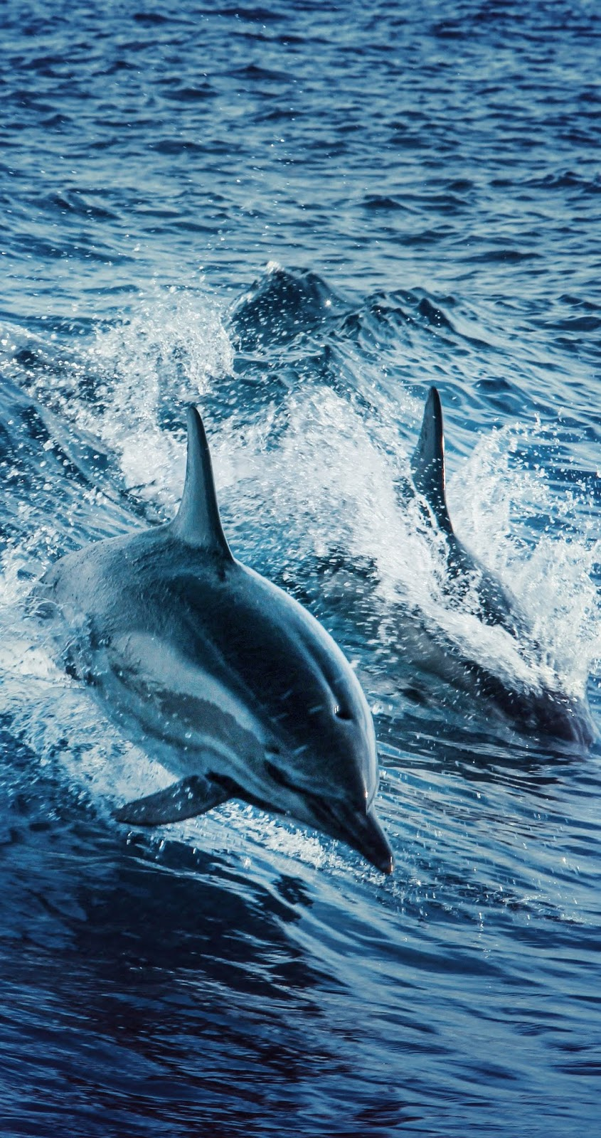 Amazing dolphins swimming.