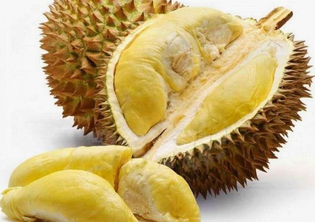 Durian Montong kaki 3 bibit durian Montong Tarakan