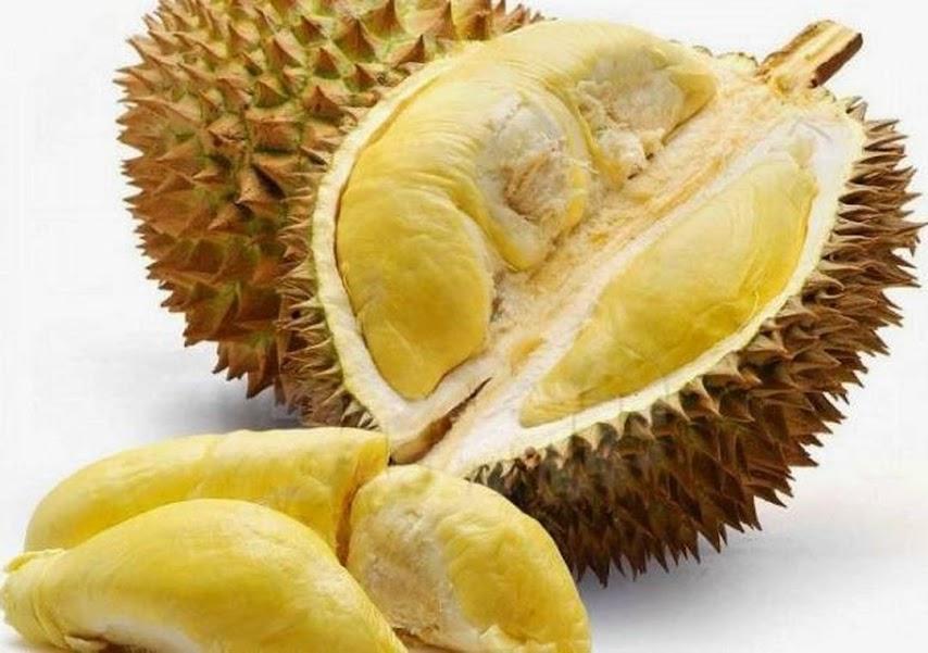 Durian Montong kaki 3 bibit durian Montong Kota Administrasi Jakarta Utara