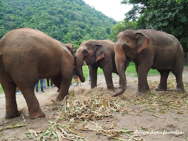 Elephant Nature Park (Chiang Mai)
