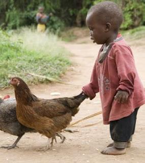 Pesan Bill Gates di afrika untuk beternak ayam