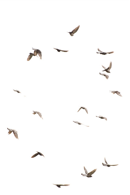 Villa Manila: Birds flying high, you know how I feel..... - photo#18