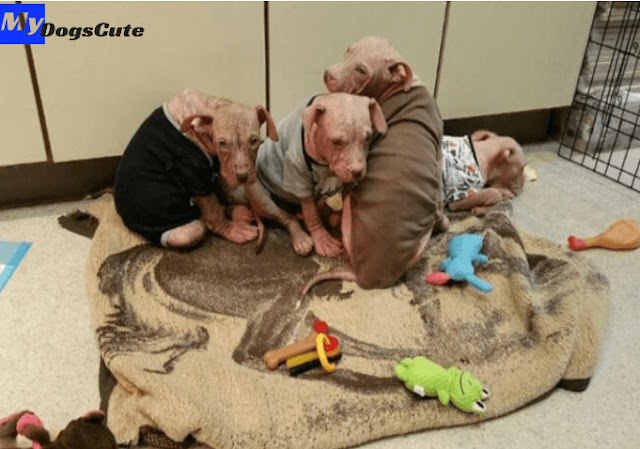 Veterinarians gave a second life to the found dogs