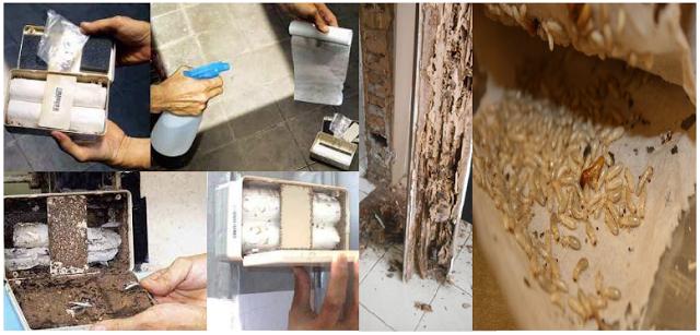 Inilah Cara Tepat Mencegah dan Usir Rayap yang Merusak Kusen Rumah dengan Mudah dan Sederhana !