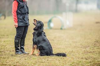 Enseñarle trucos a tu perro