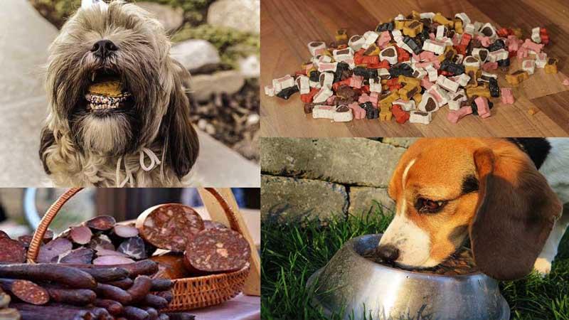 Homemade-Dog-Food-Recipes