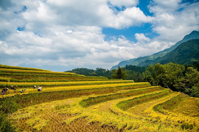 Stunning Ha Giang: In pictures 4