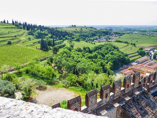 Soave in the Veneto wine region