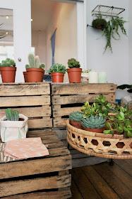 Cactus / Skinny laMinx / Cactus Club / Atelier rue verte le blog /