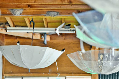 傘を逆さにつるして燕の巣を守る現代アート