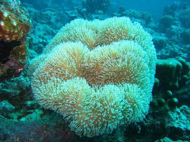 Υπέροχα κοράλλια σε εντυπωσιακούς σχηματισμούς