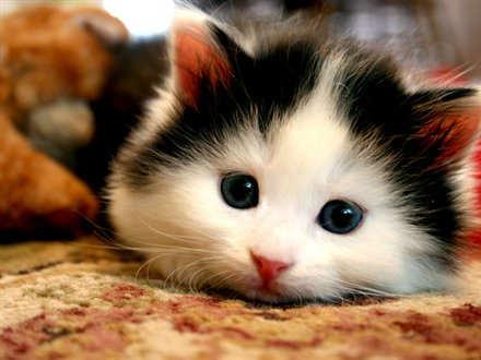 Cute Pet | Dreams come true