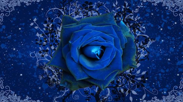 wallpaper mawar biru