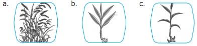 Soal IPA Kelas 2 Bab 1 – Mengenal Hewan dan Tumbuhan