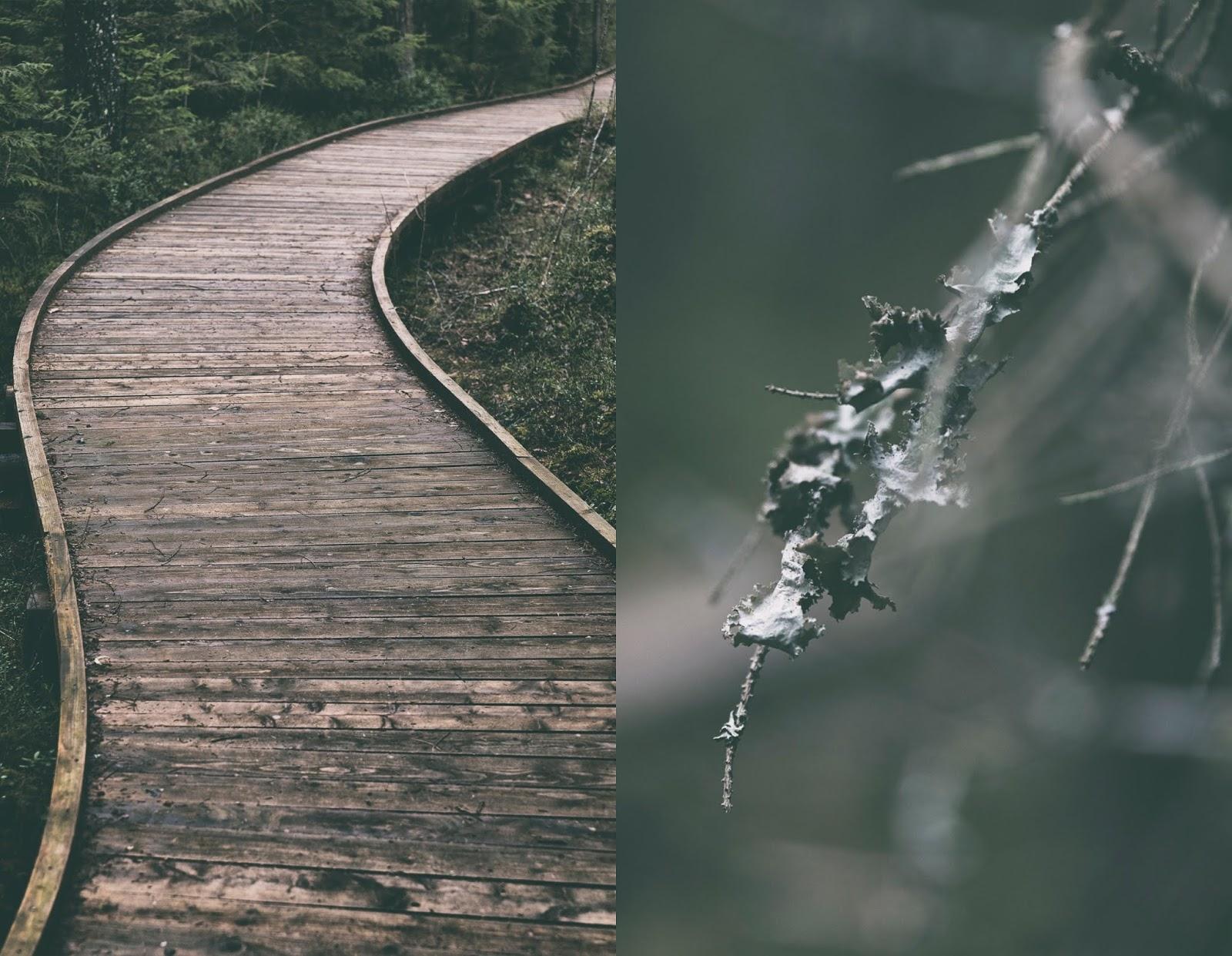 Hyvinkää, Terveysmetsä, luonto, luontopolku, nature, woods, metsä, metsäreitti, naturephotography, polku, valokuvaus, valokuvaaminen, Frida Steiner, Visualaddict, visualaddictfrida, luontovalokuvaus, this is Finland, Suomi, visit finland