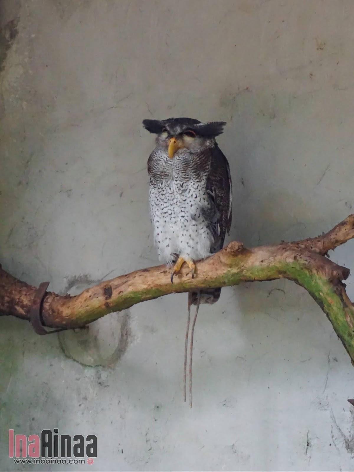 KL BIRD PARK - Hak Milik Ina Ainaa