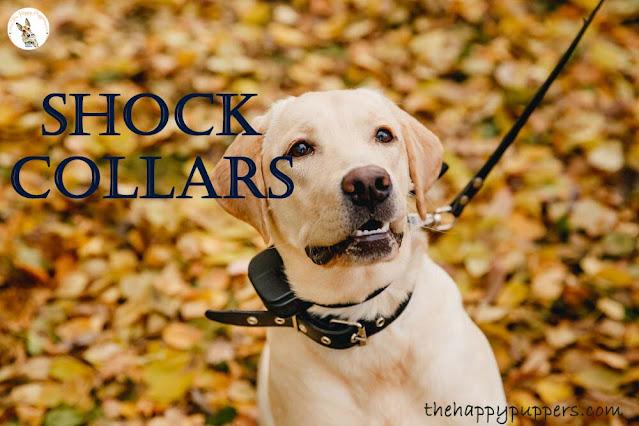 shock collars