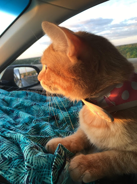 traveling cats, tiny trailer camping