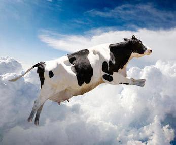 La vaca de tu vida