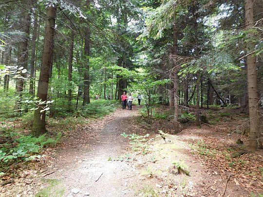 Schodzimy z Żurawnicy na Przełęcz Carchel.