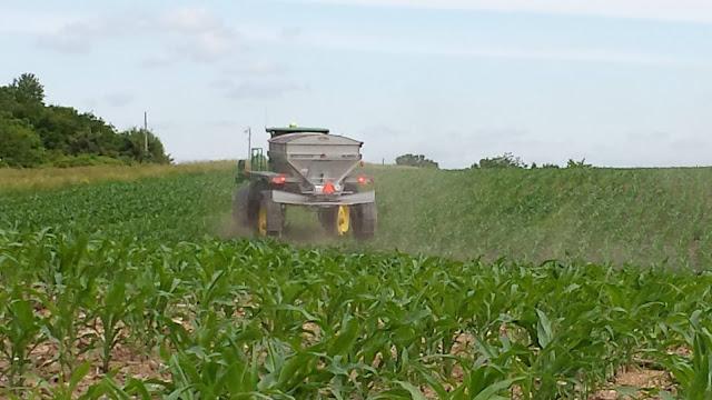 nitrogen fertilizer management minnesota