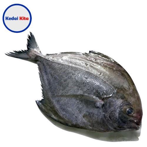 Ikan Bawal Hitam 500 Gram