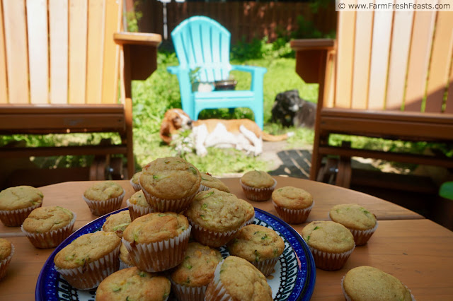 photo of a plate of peach zucchini muffins on a table outside, dogs napping in the sunny background