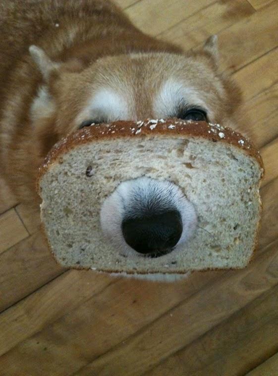 פרוסת לחם על האף