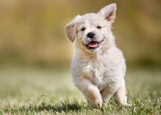 movimento para cães